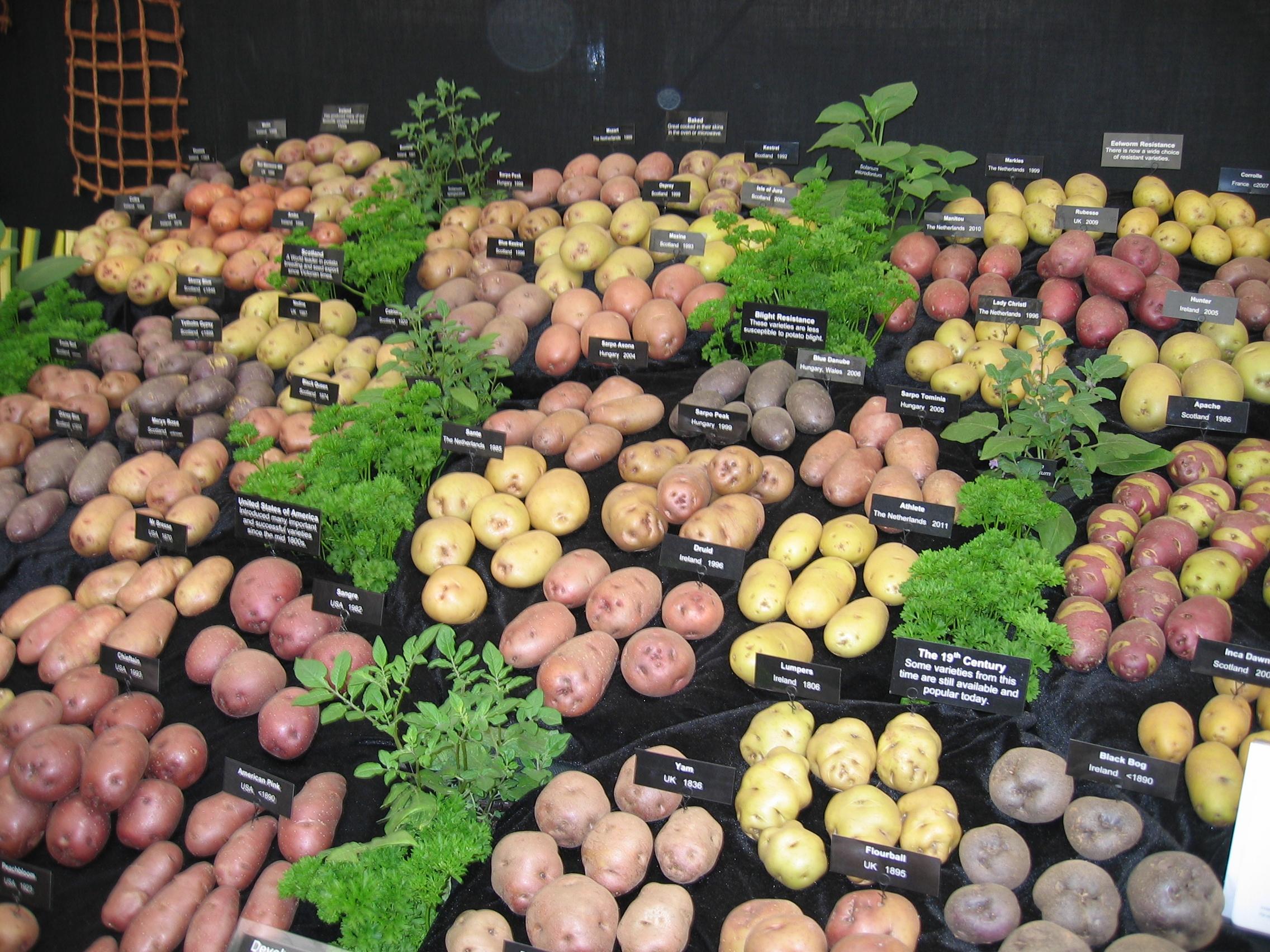 Ik ben een aardappelfanaat, maar ik heb nog nooit zoveel verschillende aardappelsoorten bij elkaar  gezien. Puur genieten!